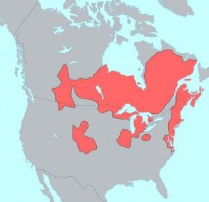Resim 10 Algonkin Diller Haritası