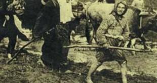 turk-anasi
