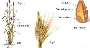 Bir ekmek nasıl oluşur.!…. ve nasıl tüketilir.?..
