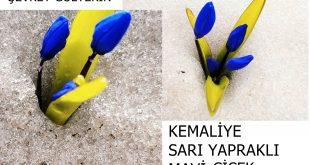 """Kemaliye'nin endemik coğrafyası ve """"Kar çiçekleri"""" Şevket Gültekin'in resimli dünyası – Erzincan"""